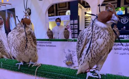 WATCH: 19 countries to participate in Katara International Hunting & Falcons Exhibition
