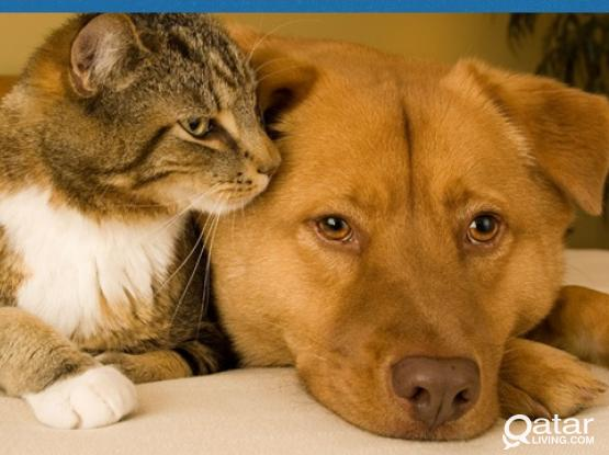 Hotel Accommodation for your Pets