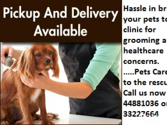 Pickup and Delivery available