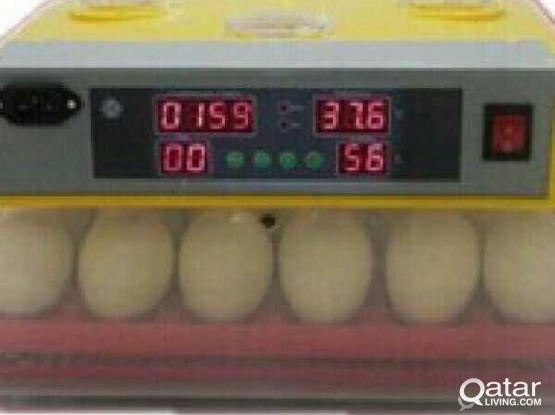 Incubators for sale in Qatar-e