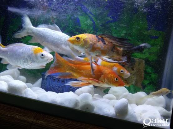 Fish tank very urgent sale