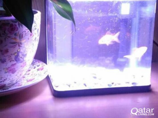Aquariums or Fish Tanks for Cheap Price