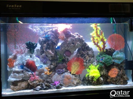 salt fish Aquarium