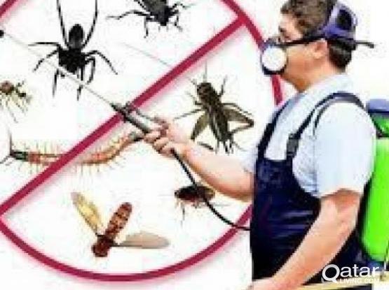 مكافحه حشرات 74707249