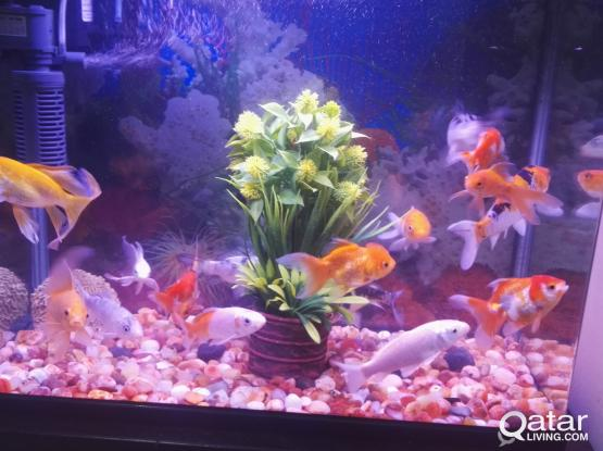 Aquarium for sale urgent