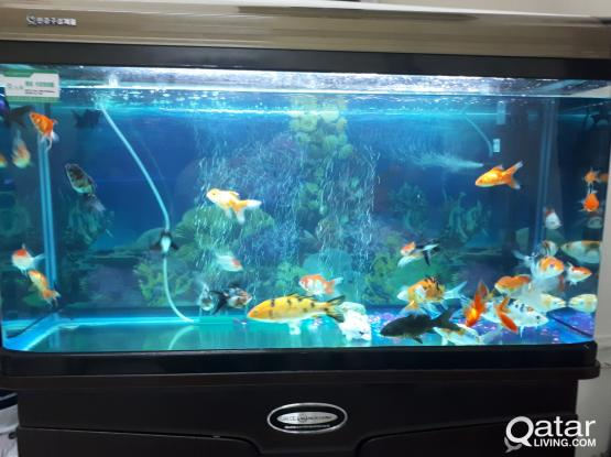 aquarium 159 liter fish tank price negotia urgent