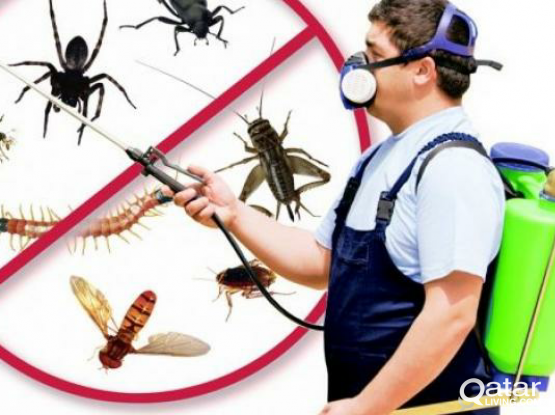 Cleaning Pest Control (35% Off)