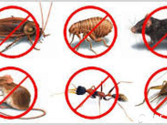 Are you looking for perfect pest control
