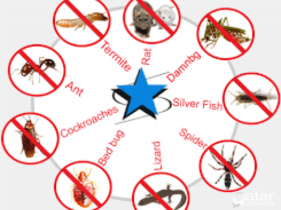pest control service &gel treatment for cockroach & fog treatment