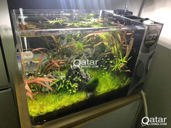Planted Nano Aquarium for sale