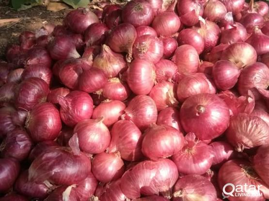 Export Indian Onion