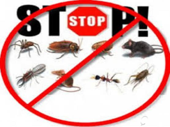 BEST PEST CONTROL SERVICES IN TOWN