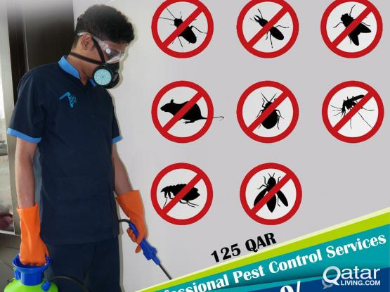 Call or Whatsapp 7723 5732 | 31141155  Professional Pest Control Services! 50% Offer.