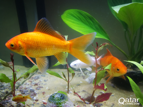 Gold Fish and others... must go ASAP