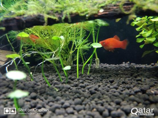 aquarium fish .all for 50
