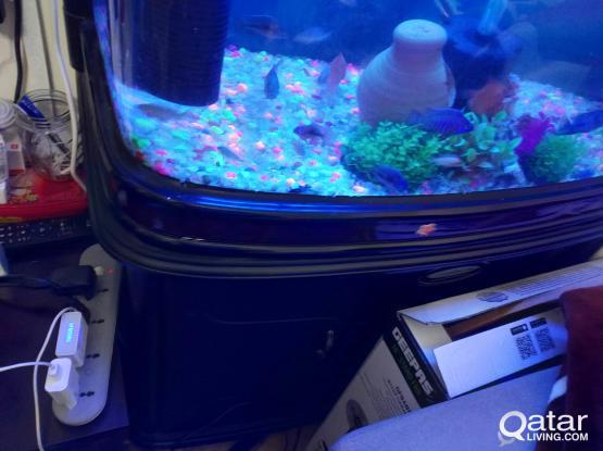 Big size fish tank / Aquarium for sale