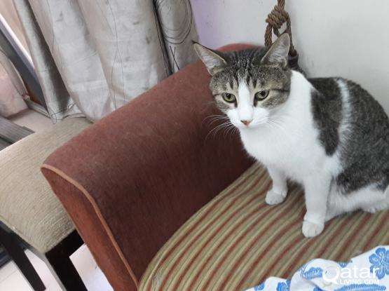 4 Beauty Cats need new owner