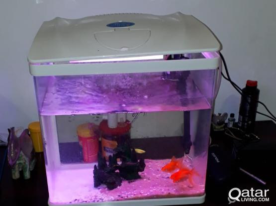 FISH TANK FOR SALE WITH FISHES !!! GOOD PRICE !!!