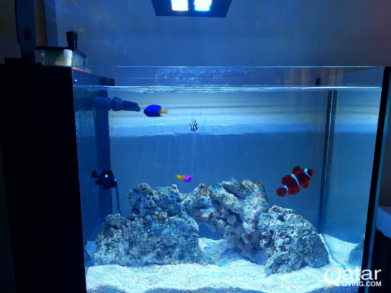 Salt water Aquarium / Fish tank