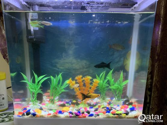 Fish Aquarium Urgent Sale