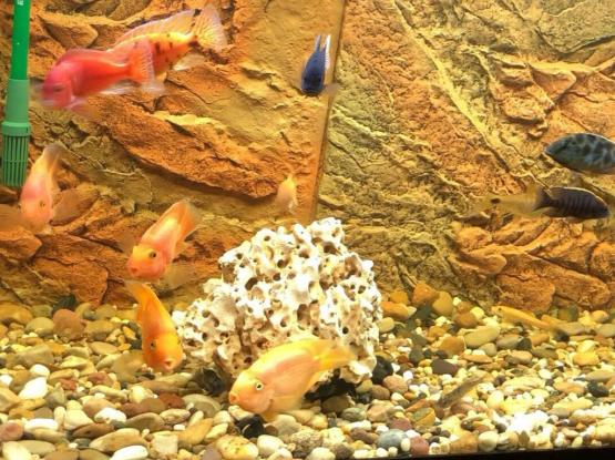 Full set Aquarium for sale with fishes and all.