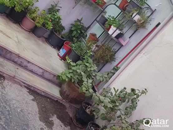 Outdoor Plants and Flowers for Sale