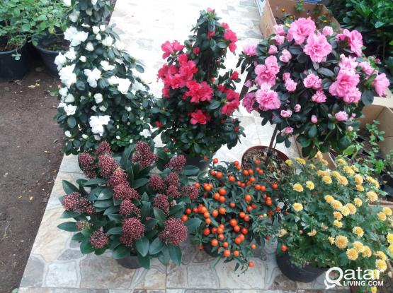 OVERSTOCK PLANTS(OUTDOOR AND INDOOR)!!!!!!!!!