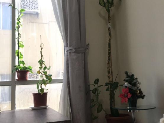 indoor plants for sale