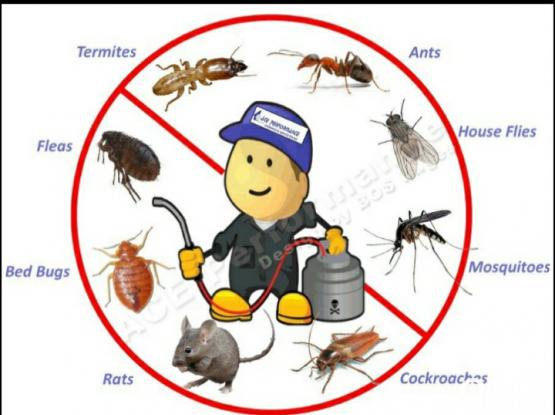 pest service 100 qr 55501762