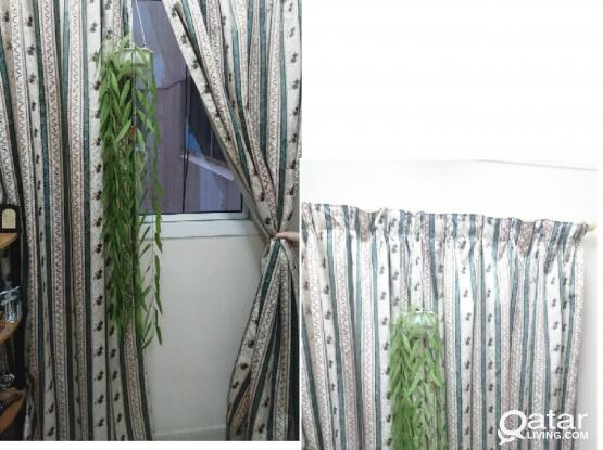 Curtains (as new) and Rods (good condition). Urgent