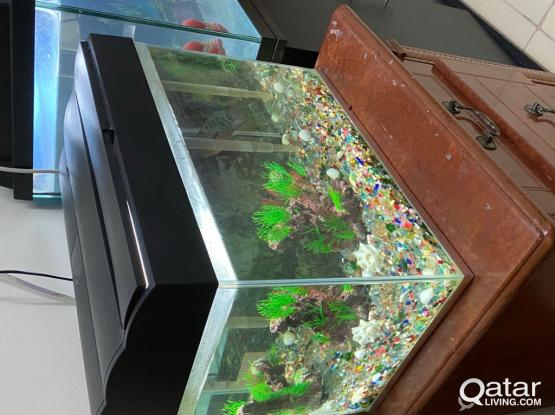 2 Aquarium For Sale