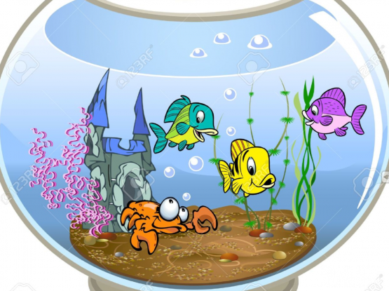 Looking to adopt any type of fishes.