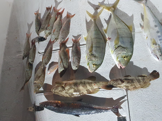Fishing Trip Jigging, Casting  Bait Fishing