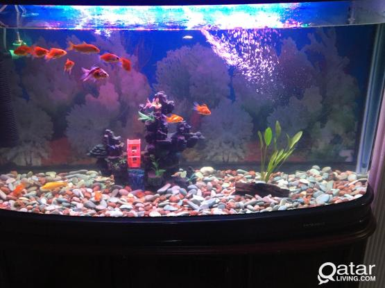 Fish Tank for Sale !!!!