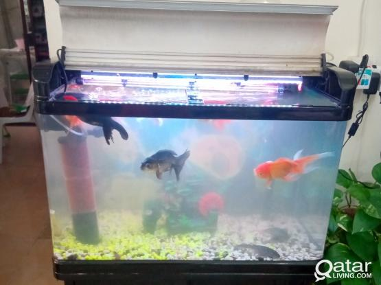 BIG AQUARIUM FISH TANK WITH FISHES AND ACCSSORIES