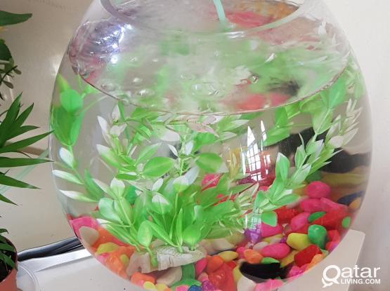 Big Aquarium Bowl for sale with fishes