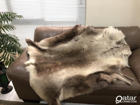 Scandinavian Reindeer Hide