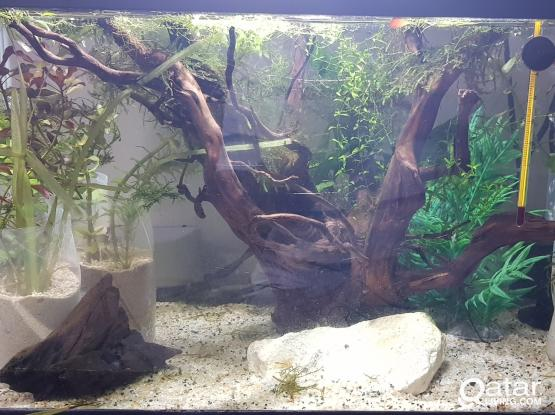 Aquariums for sale with fishes