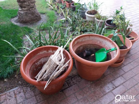 outdoor plants for sale