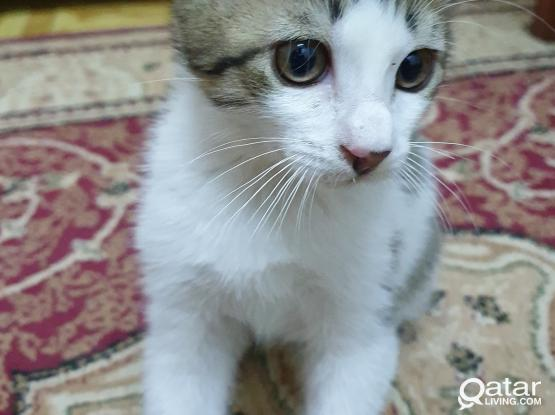Homely Kitten a Cat is available