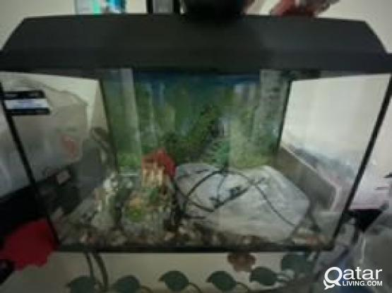 Aquarium With Thermostat And Water Filter