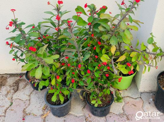 Outdoor  Plants - Offers Available