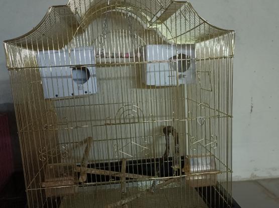 Big golden cage
