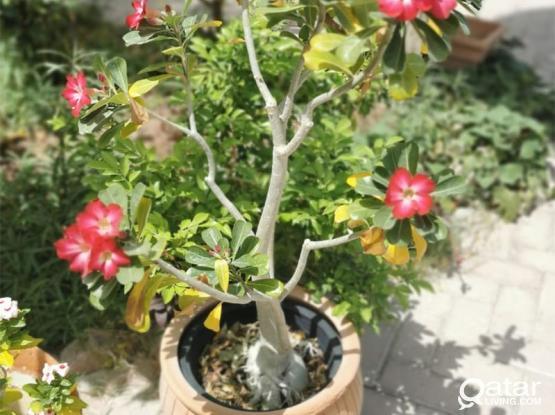 Plants and pots bulk sale