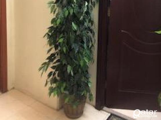 Two Plastic Decoration trees