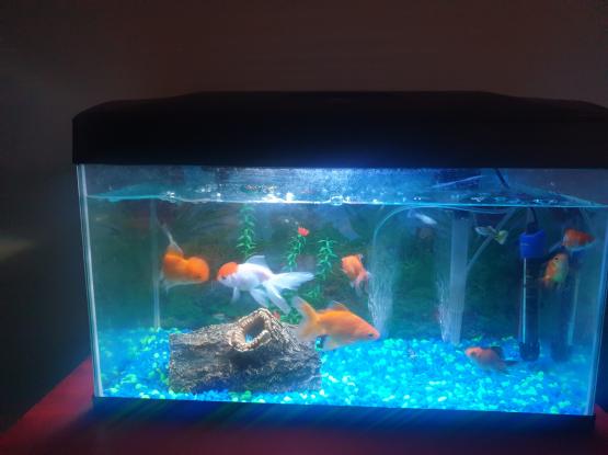 50 litre acquarium with fish