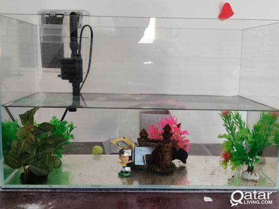Fish Tank with All required Accessories