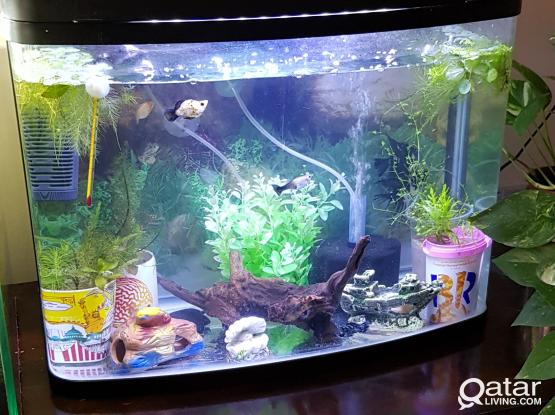 Aquarium with fishes for sale....