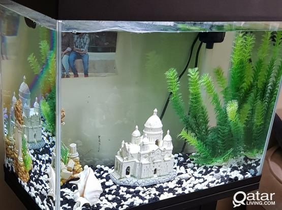 Aquarium with fishes for sale....