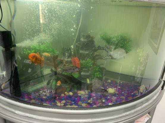 280 Ltr Aquarium For Sale